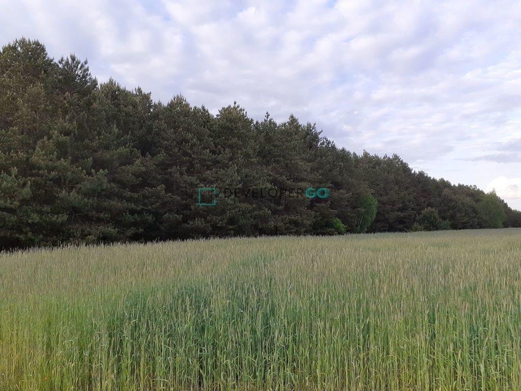Działka leśna na sprzedaż Zakrzewek  17900m2 Foto 3