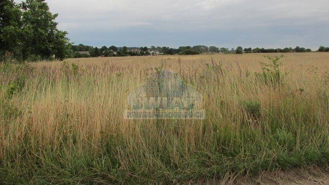 Działka rolna na sprzedaż Dolice  4800m2 Foto 4