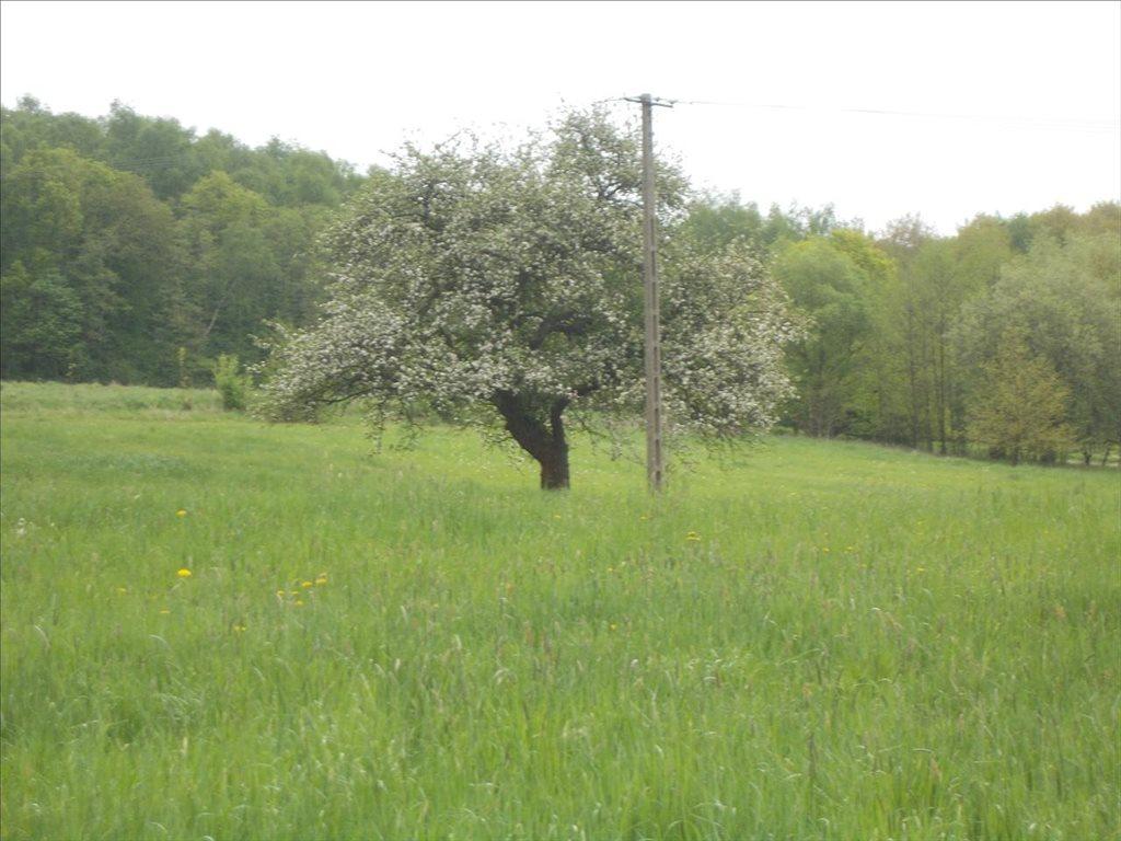 Działka rolna na sprzedaż Sułów, Biskupice  15000m2 Foto 3