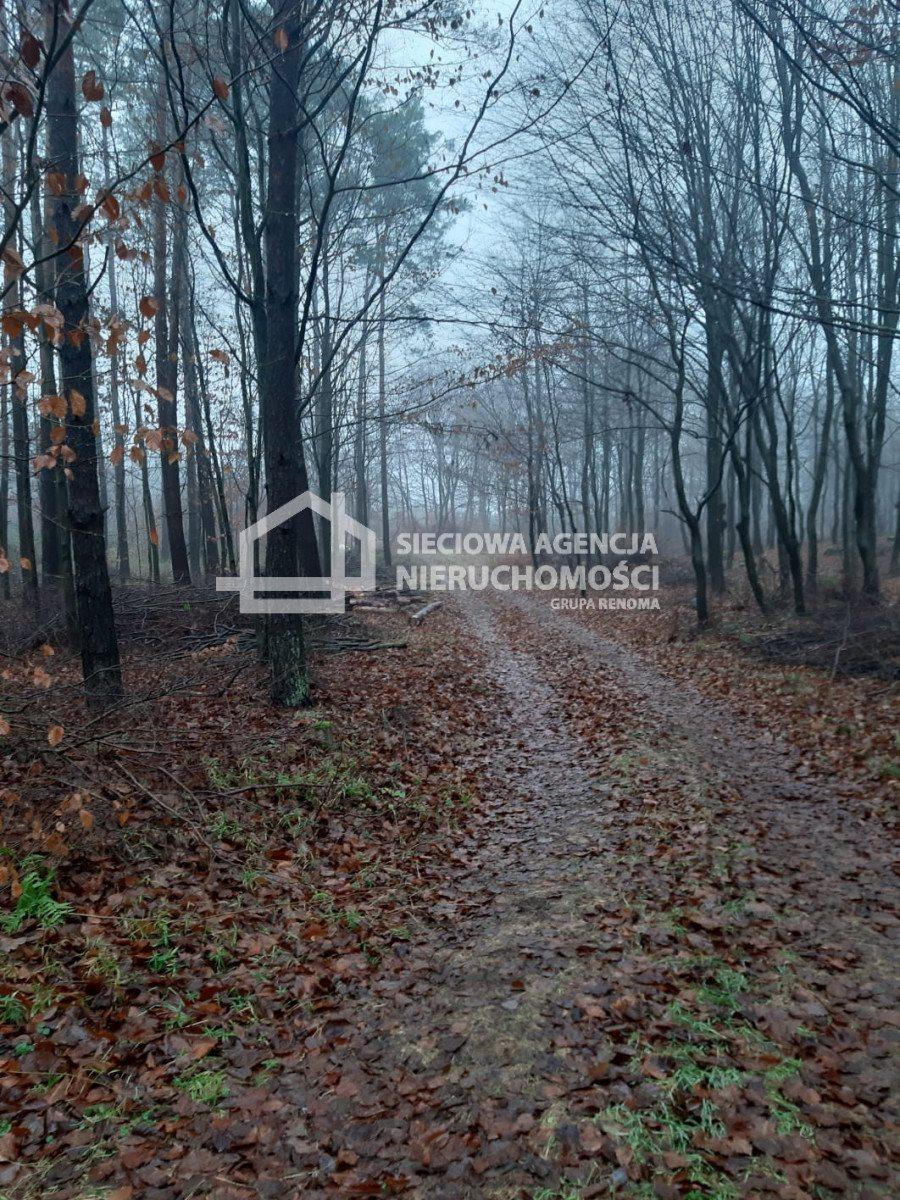 Działka leśna na sprzedaż Nowa Karczma, Kamiony  2605m2 Foto 4