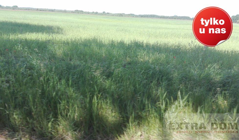 Działka rolna na sprzedaż Bochlin  320000m2 Foto 4