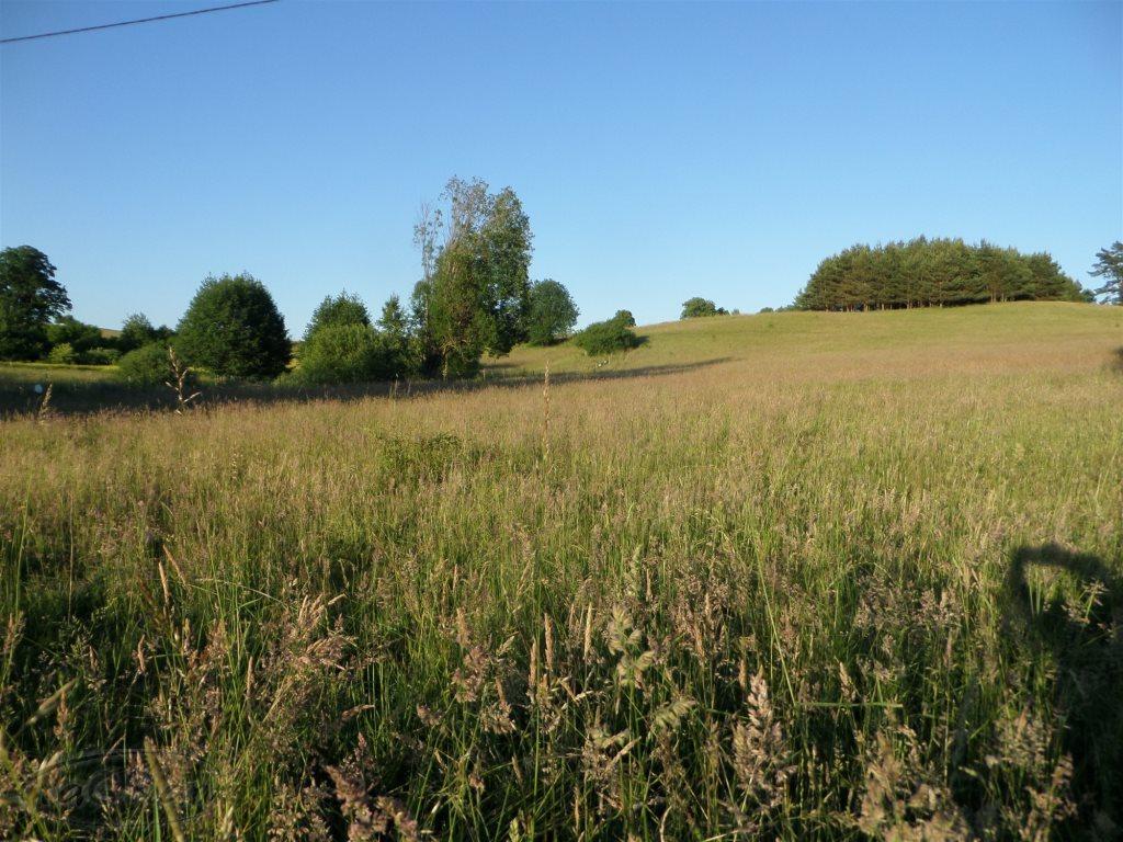 Działka rolna na sprzedaż Stare Kawkowo  3206m2 Foto 4
