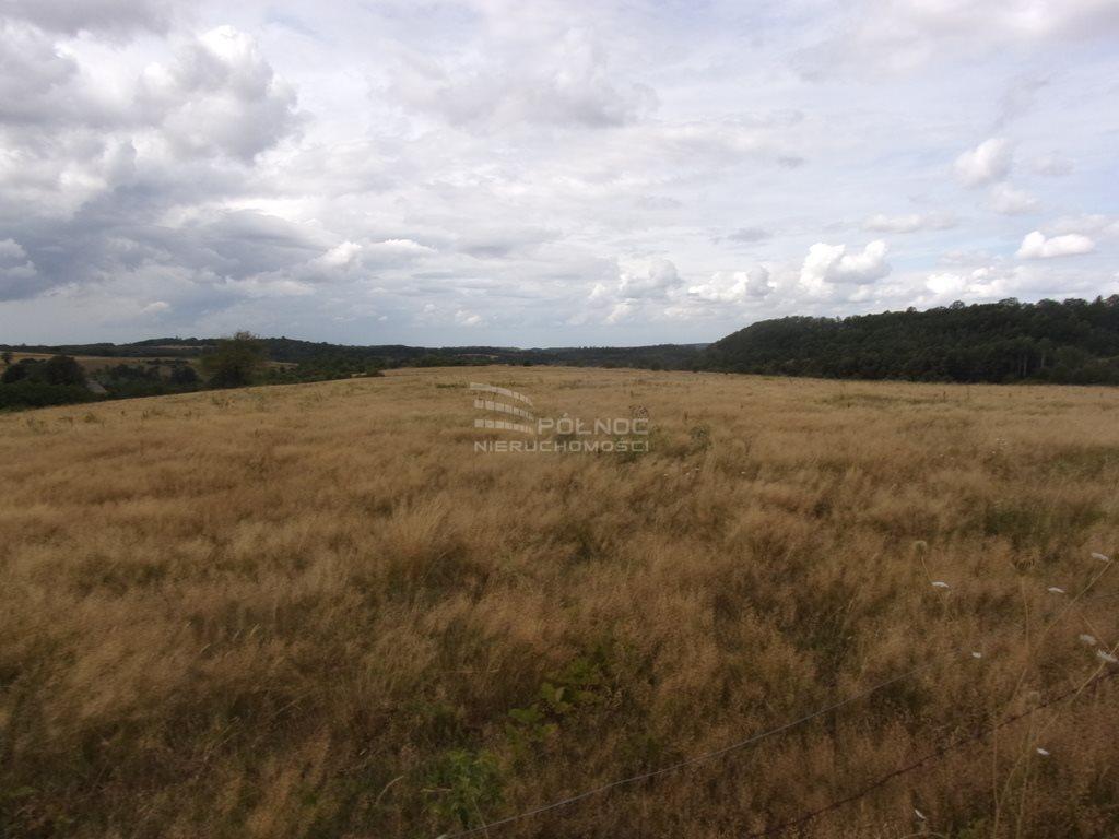 Działka rolna pod dzierżawę Płóczki Górne  800000m2 Foto 3