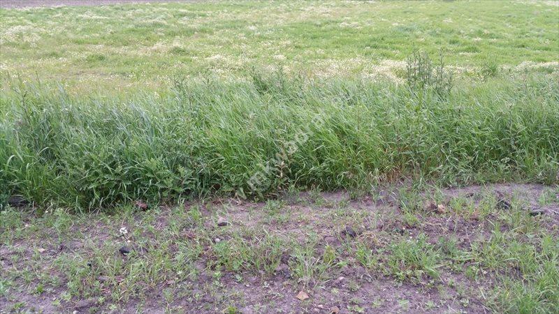 Działka rolna na sprzedaż Grądki  33700m2 Foto 1