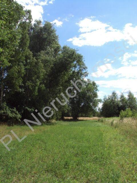 Działka rolna na sprzedaż Holendry Baranowskie  4000m2 Foto 8