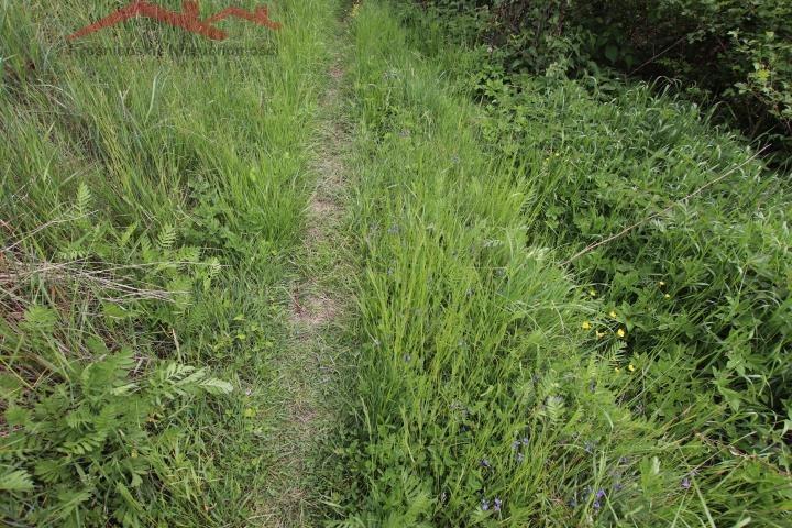 Działka rolna na sprzedaż Korczyna  3000m2 Foto 6