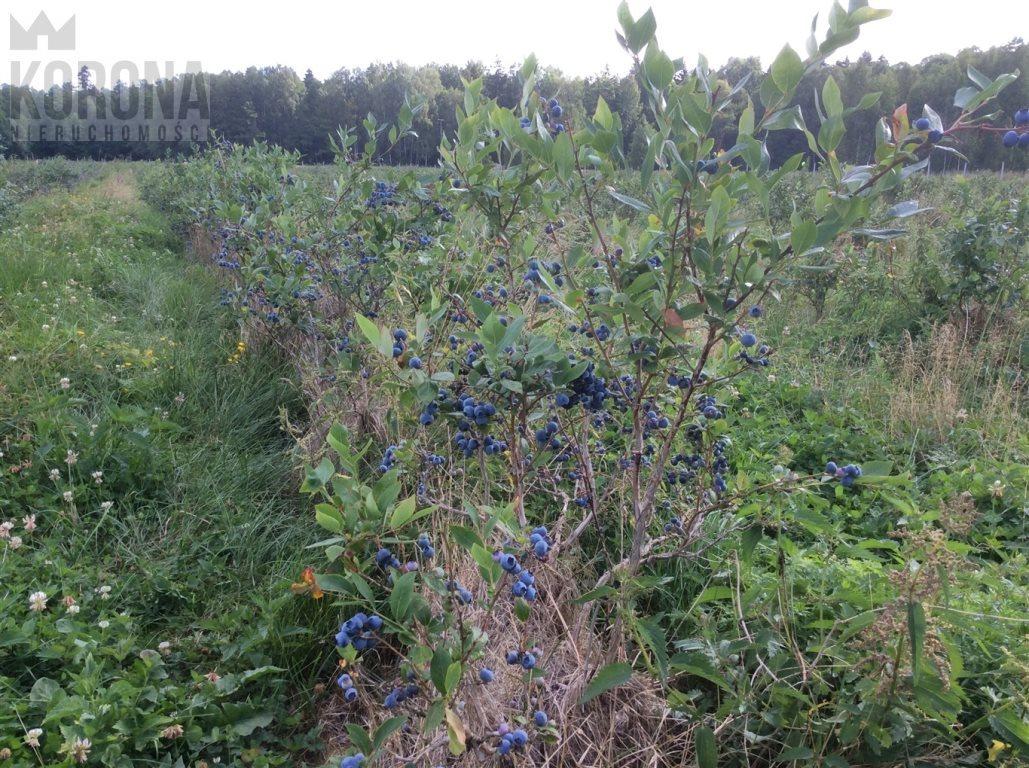 Działka rolna na sprzedaż Pasieki, Babia Góra  13300m2 Foto 5