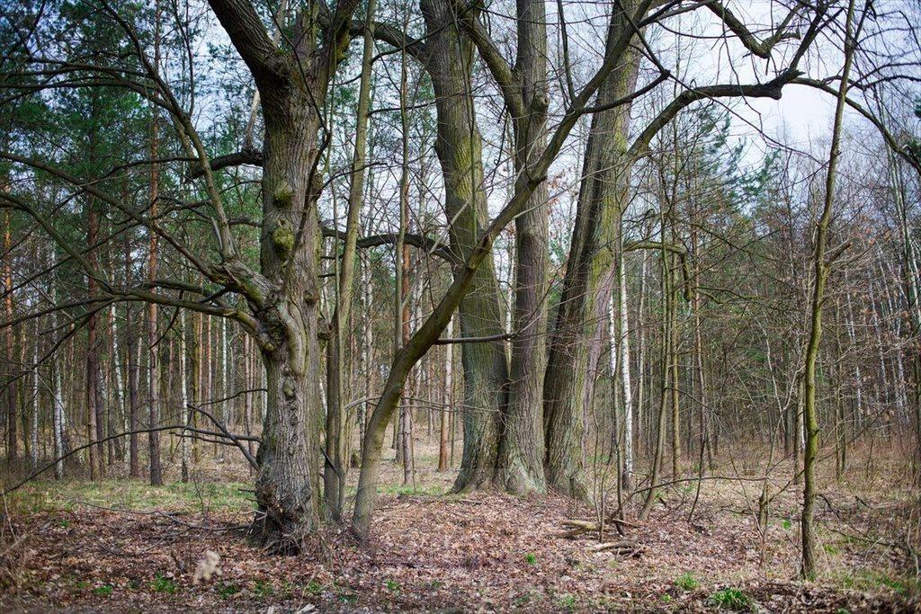 Działka leśna na sprzedaż Warszawa, Wawer  4135m2 Foto 3