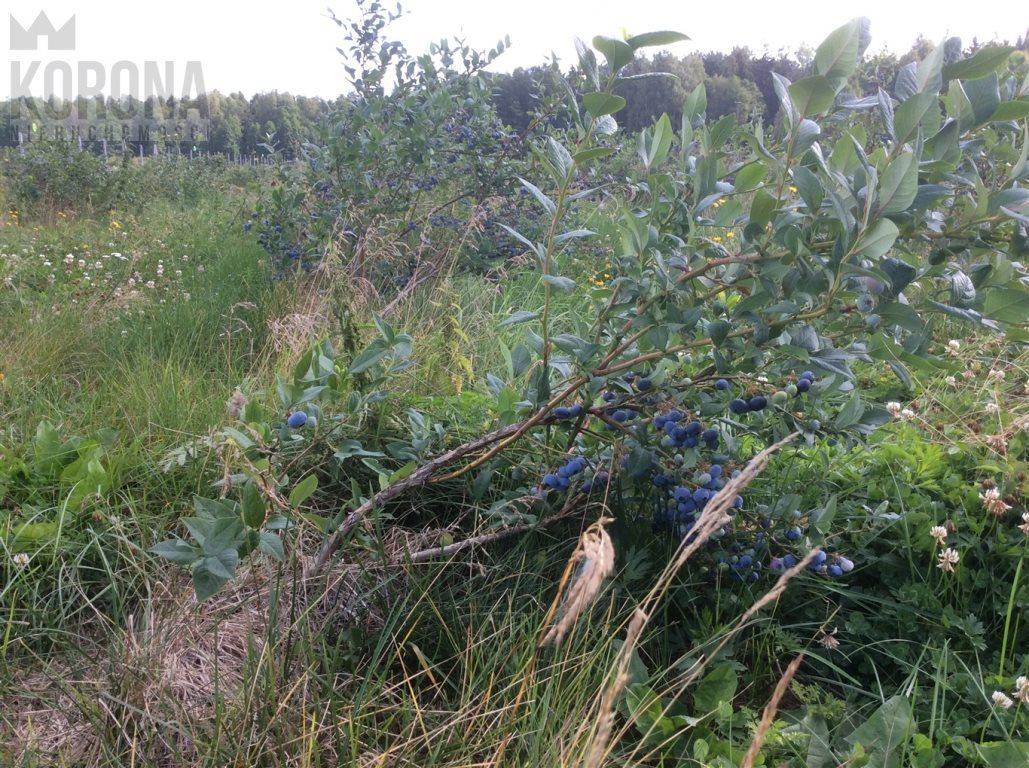 Działka rolna na sprzedaż Pasieki, Babia Góra  13300m2 Foto 4