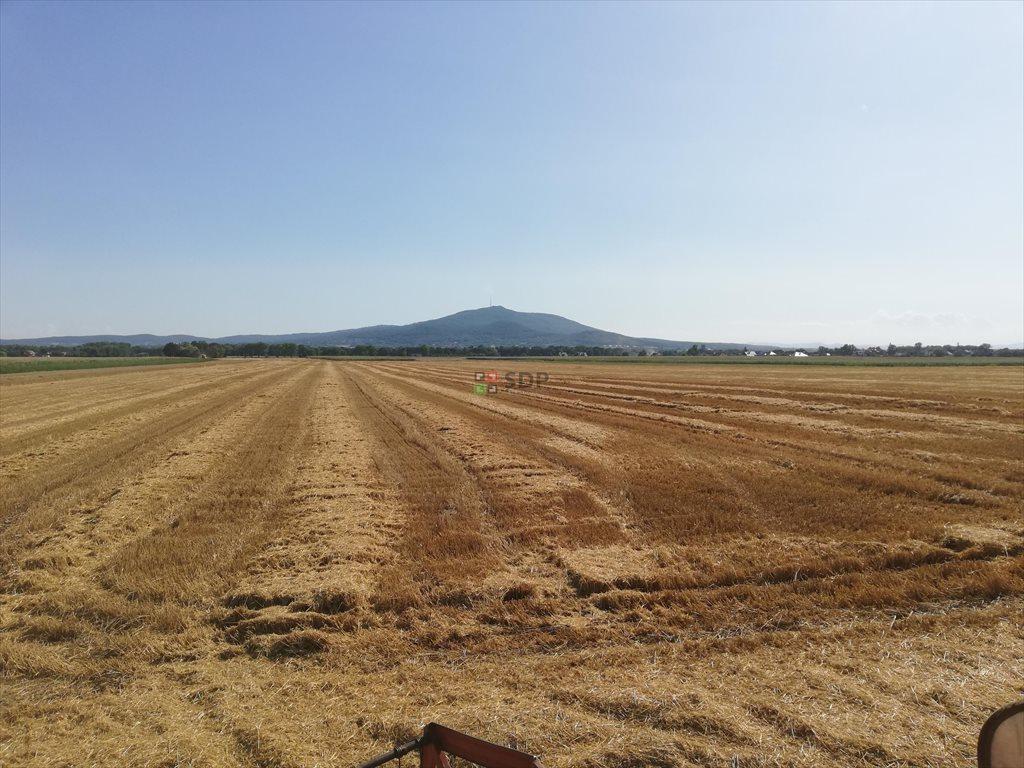 Działka rolna na sprzedaż Michałowice  77000m2 Foto 5