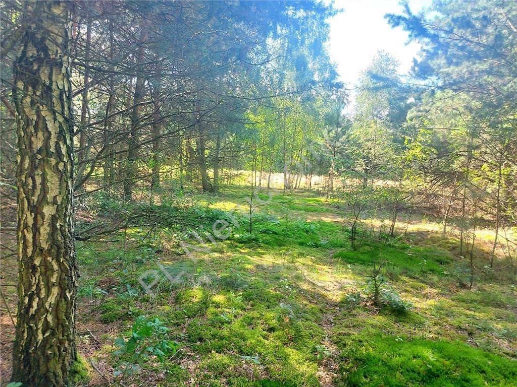 Działka rolna na sprzedaż Choiny  60500m2 Foto 11