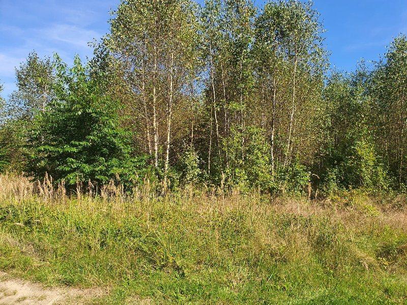 Działka leśna na sprzedaż KAMIENICA POLSKA, RUDNIK WIELKI  1958m2 Foto 2