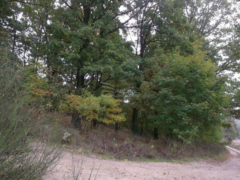Działka leśna na sprzedaż Bolesławiec, Zabobrze  21908m2 Foto 5