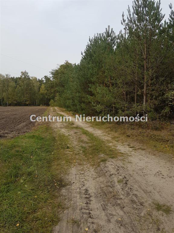 Działka leśna na sprzedaż Bałdrzychów  21000m2 Foto 3