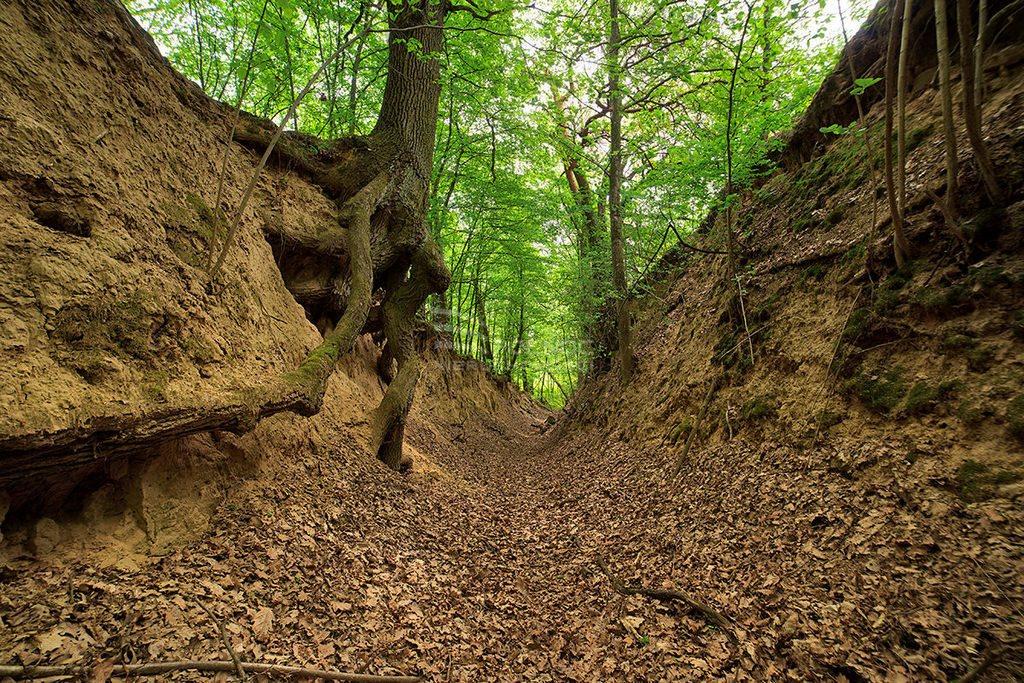 Działka rolna na sprzedaż Kazimierz Dolny, Wylągi  21600m2 Foto 10