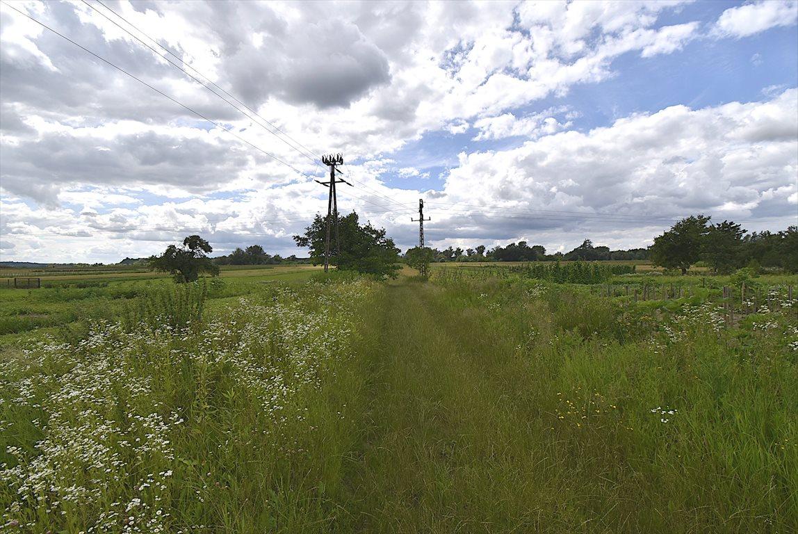 Działka rolna na sprzedaż Puławy  2900m2 Foto 3