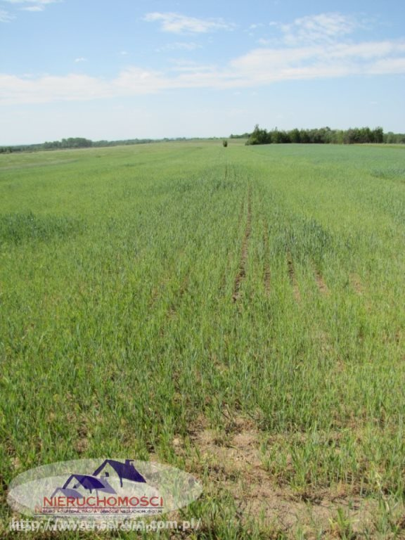 Działka rolna na sprzedaż Piasek Mały  17600m2 Foto 1