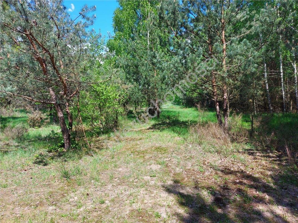 Działka rolna na sprzedaż Stare Groszki  15000m2 Foto 9