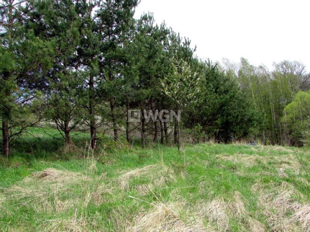 Działka inwestycyjna na sprzedaż Nowy Borek, Nowy Borek, Nowy Borek  5019m2 Foto 8
