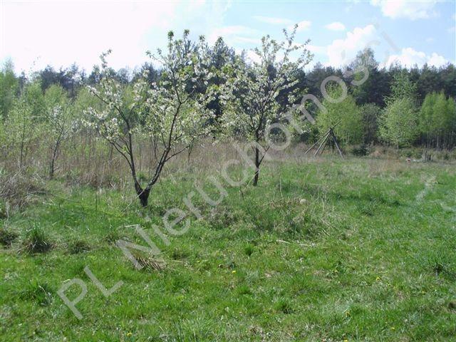 Działka rolna na sprzedaż Zdzieszyn  25726m2 Foto 3