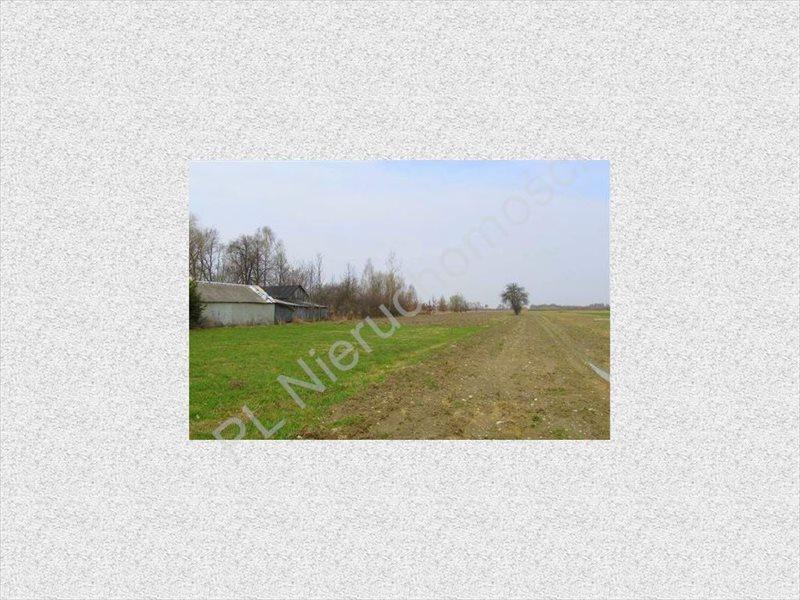 Działka rolna na sprzedaż Tyborów  4500m2 Foto 2