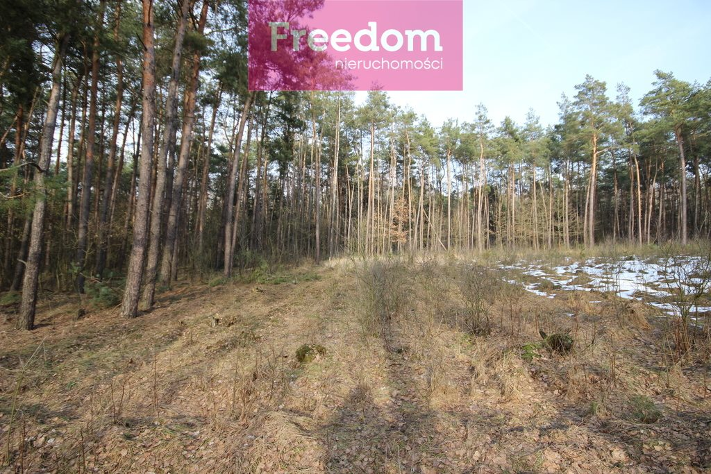 Działka leśna na sprzedaż Zielkowo  32200m2 Foto 12