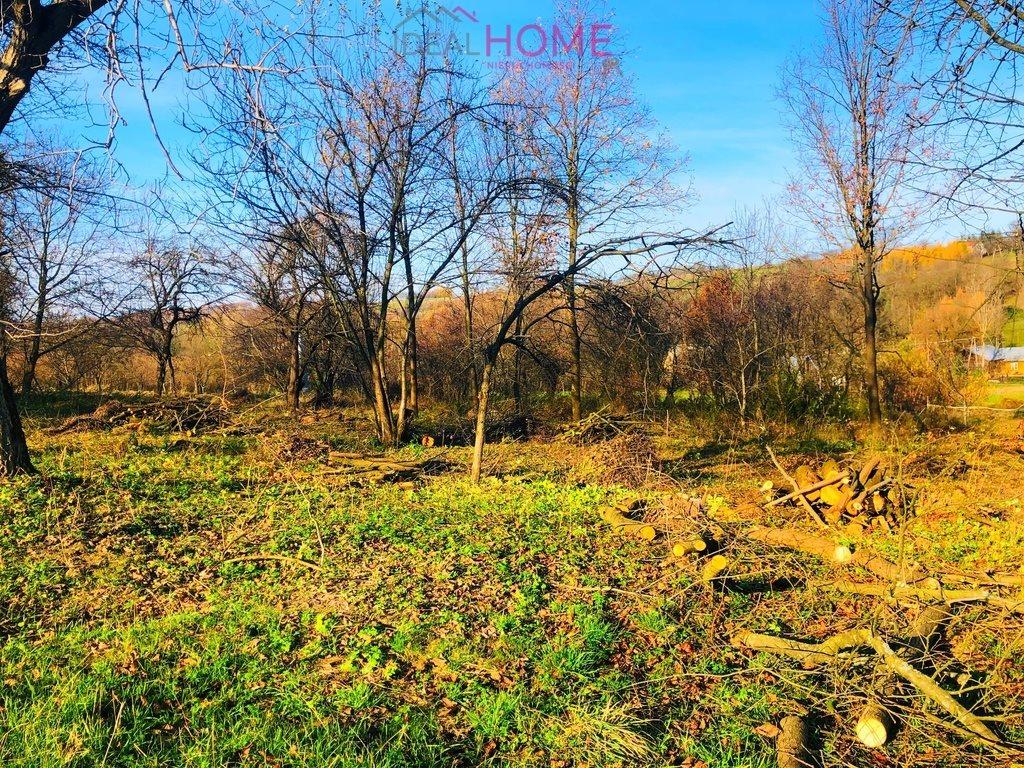 Działka leśna na sprzedaż Siedleczka  10150m2 Foto 2