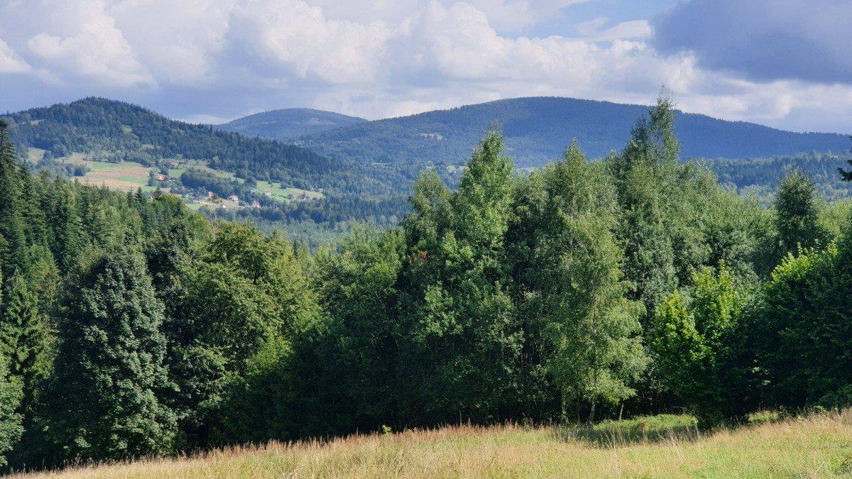 Działka rolna na sprzedaż Pewel Wielka, Buławka  5200m2 Foto 2