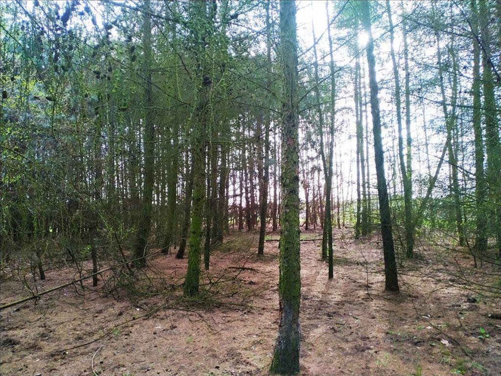 Działka rolna na sprzedaż Rościsławice, Oborniki Śląskie  15861m2 Foto 7