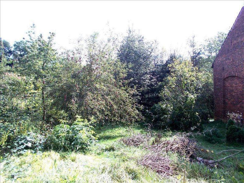 Lokal użytkowy na sprzedaż Pławna Dolna  806m2 Foto 6