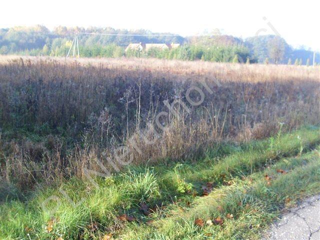 Działka rolna na sprzedaż Gurba  11800m2 Foto 2