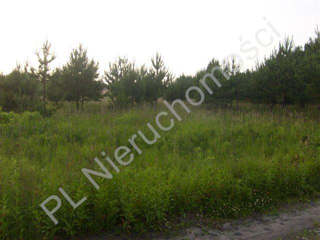 Działka rolna na sprzedaż Stare Budy  43400m2 Foto 3