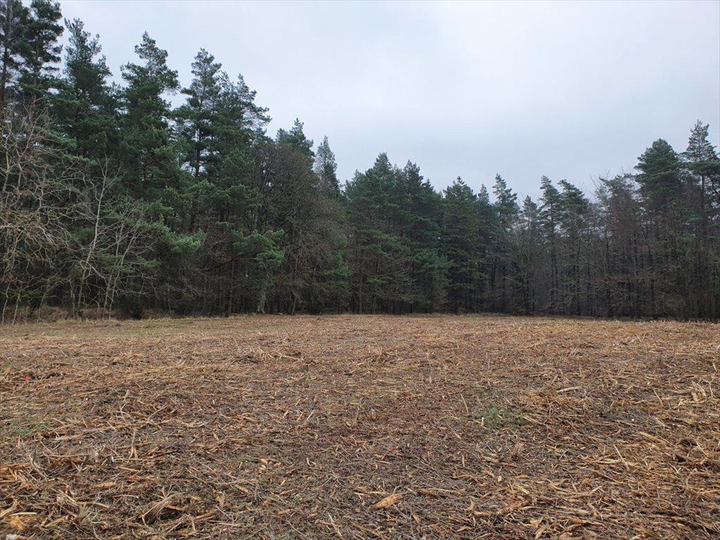 Działka rolna na sprzedaż Donimierz, Mgieł Porannych  3004m2 Foto 7