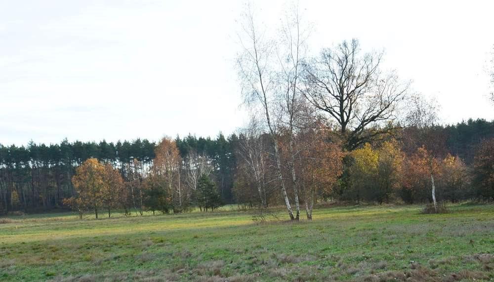 Działka rekreacyjna na sprzedaż Mokrzec  3000m2 Foto 1