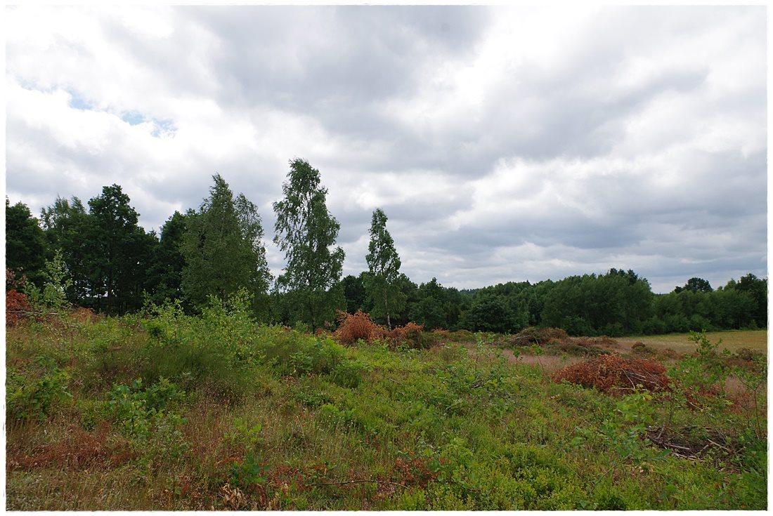 Działka rolna na sprzedaż Linia, Dębowa  12607m2 Foto 4
