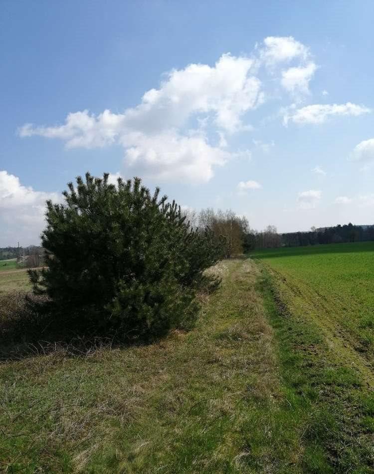 Działka rolna na sprzedaż Porwity  14700m2 Foto 1
