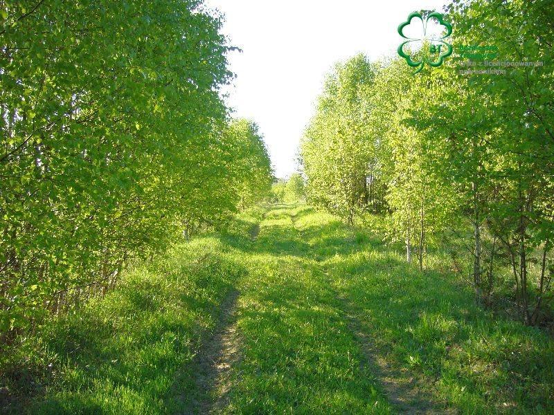 Dom na sprzedaż Trzcianka, Trzcianka okolice  890m2 Foto 2