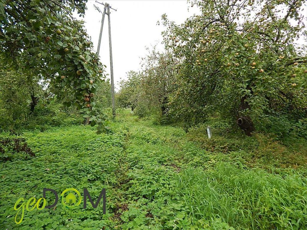 Działka rolna na sprzedaż Horodyszcze-Kolonia  11293m2 Foto 8