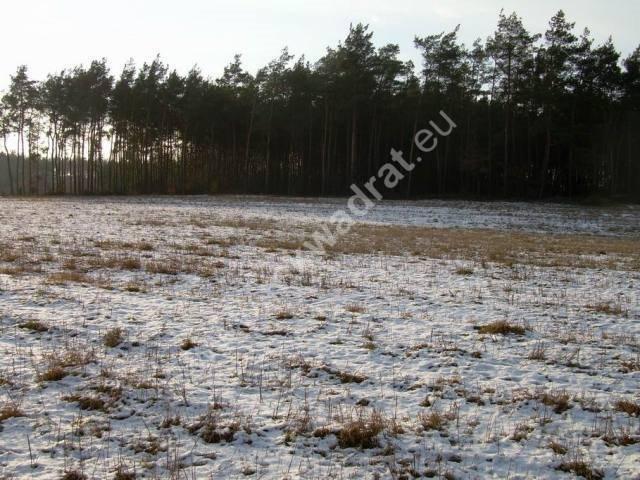 Działka rolna na sprzedaż Stanisławów  3000m2 Foto 7