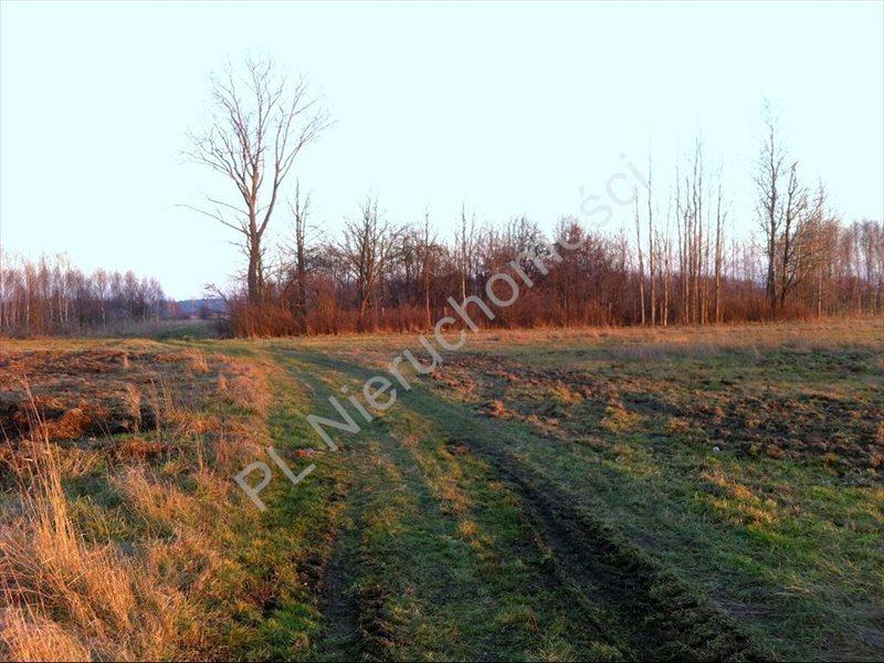 Działka rolna na sprzedaż Tyborów  20000m2 Foto 5