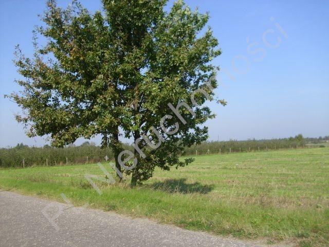 Działka rolna na sprzedaż Mszczonów  18500m2 Foto 2