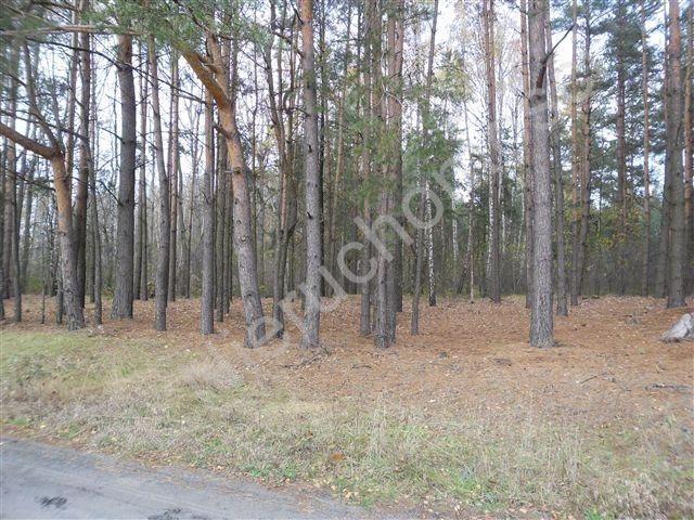 Działka leśna na sprzedaż Wólka Wybraniecka  12500m2 Foto 4