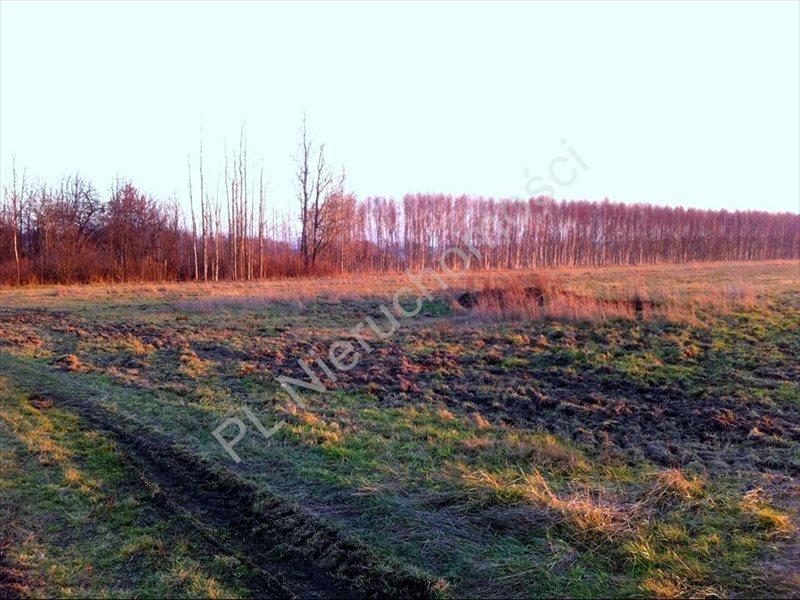 Działka rolna na sprzedaż Tyborów  20000m2 Foto 4