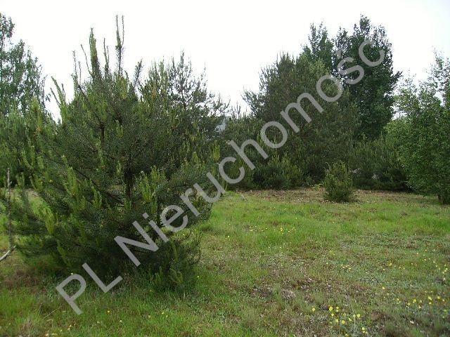 Działka rolna na sprzedaż Mszczonów  10000m2 Foto 3
