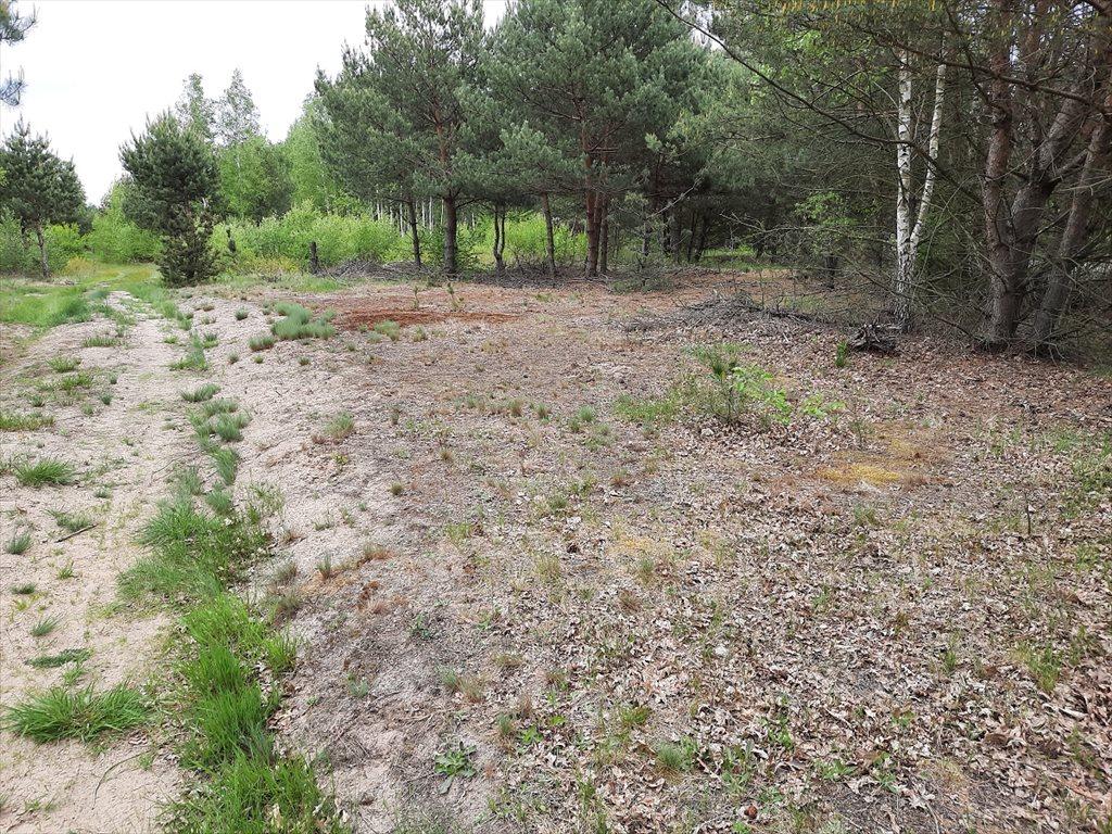 Działka rolna na sprzedaż Mariew  1500m2 Foto 2