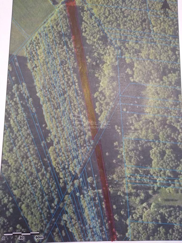 Działka leśna na sprzedaż Daniszewo  7000m2 Foto 7