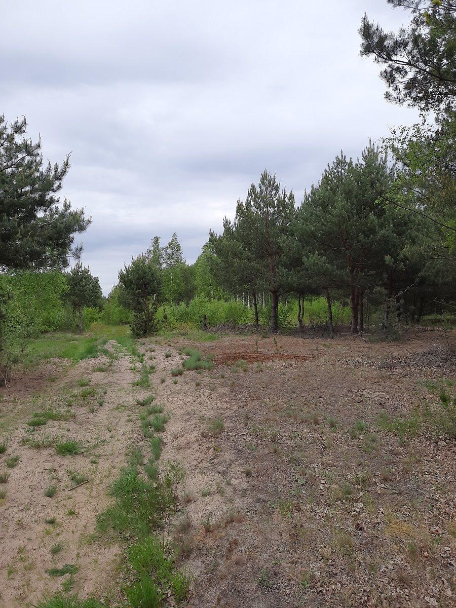 Działka rolna na sprzedaż Mariew  1500m2 Foto 3