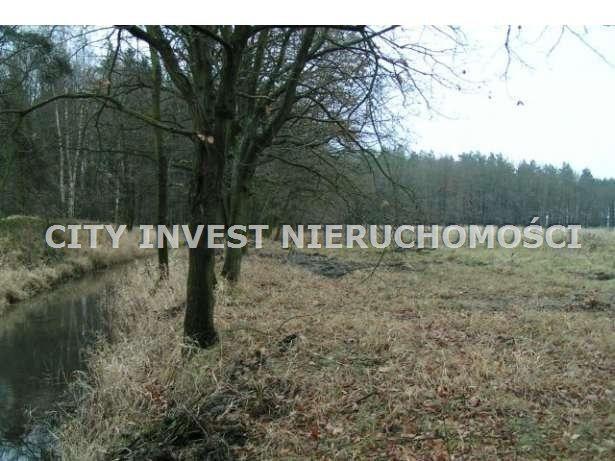Działka siedliskowa na sprzedaż Zielona Góra, Kiełpin  16700m2 Foto 2