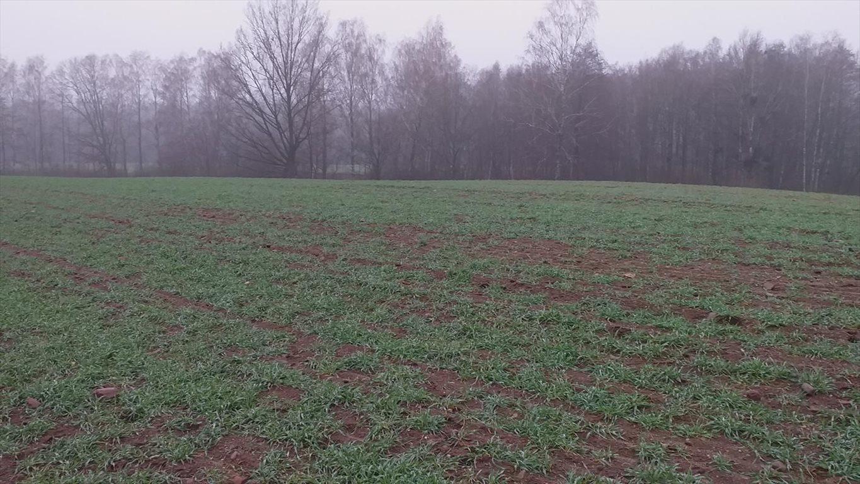Działka gospodarstwo rolne na sprzedaż Wyszki  7000000m2 Foto 8