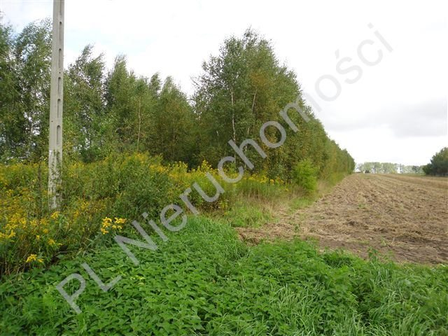 Działka budowlana na sprzedaż Glinianka  8200m2 Foto 4